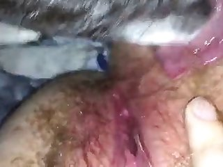 Pitbull Licks Pussy