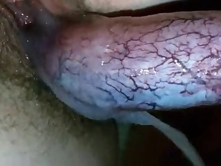 Dog Juice In Pussy