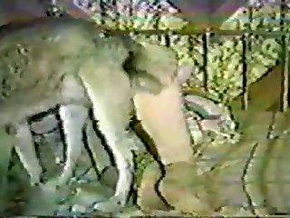 Retro Zoo Porn With Dog