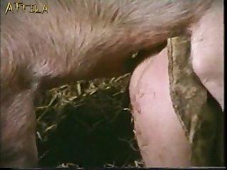 Masturbation  boar porn - Masturbazione Amatoriale
