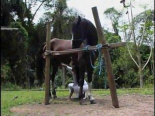 Amateu xnxx Sex horse