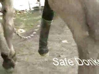 AAnimal porn Banged horse